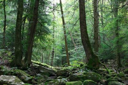 Appalacian Hemlock-Dominated Forest